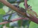Planten en Insecten_10