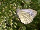 Planten en Insecten_14