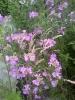 Planten en Insecten_1