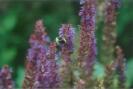 Planten en Insecten_27