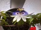 Planten en Insecten_30