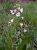 Planten en Insecten_31
