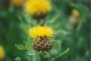 Planten en Insecten